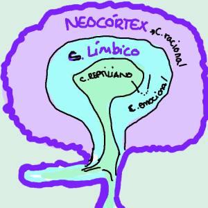 Es el dibujo más cutre de un cerebro que podéis encontrar en internet, pero espero que os sirva para entender dónde está cada cosa :)